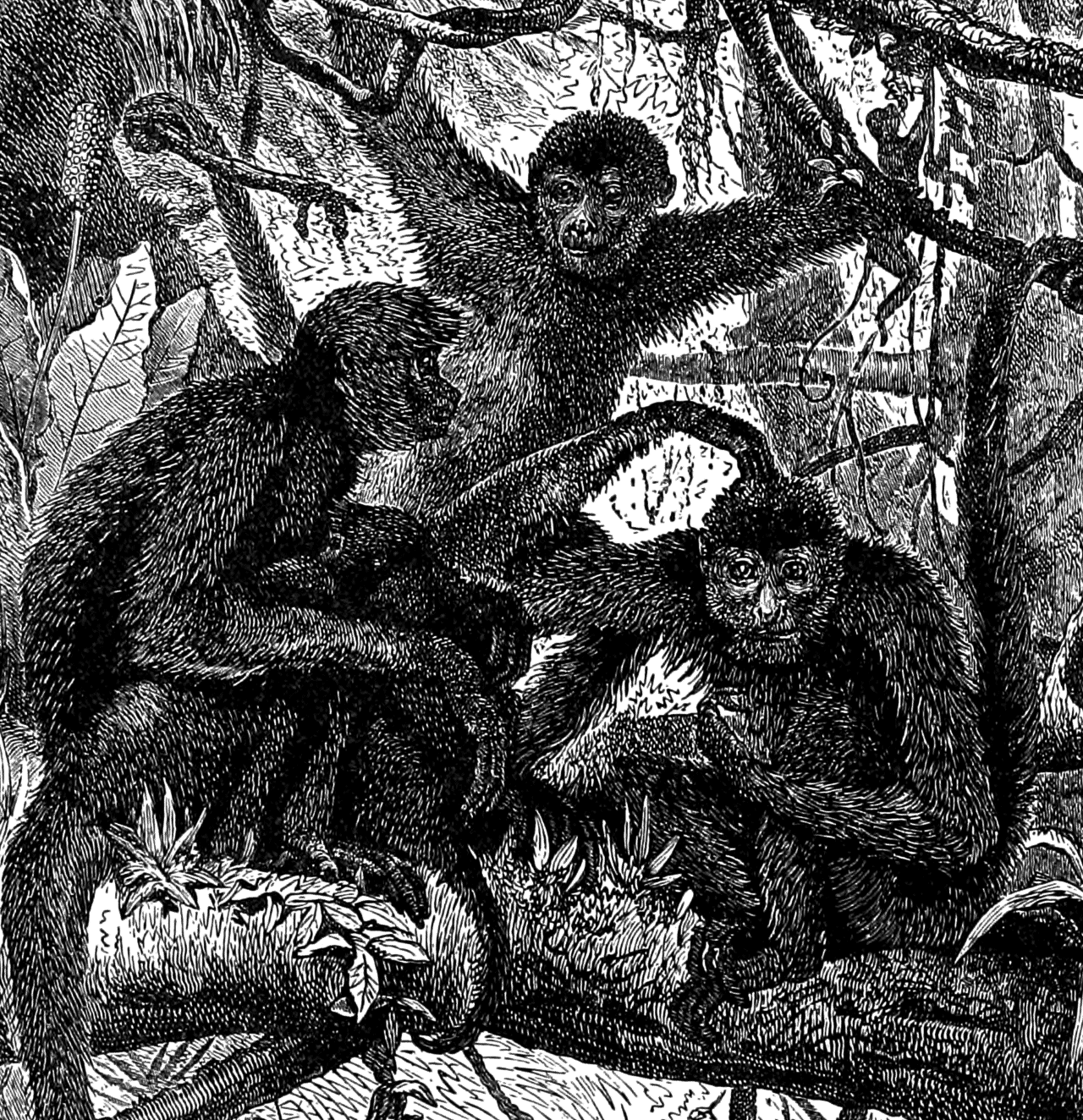 "illustration from ""Hunting and Trapping Stories: A Book for Boys"" (1903)"
